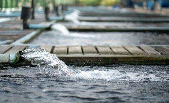 Yer Altı Suları Nasıl Tespit Edilir